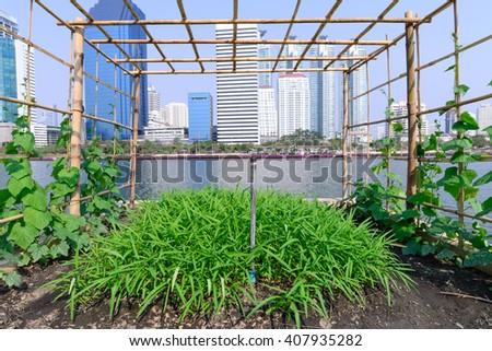 Vegetable plantation in urban garden. #407935282