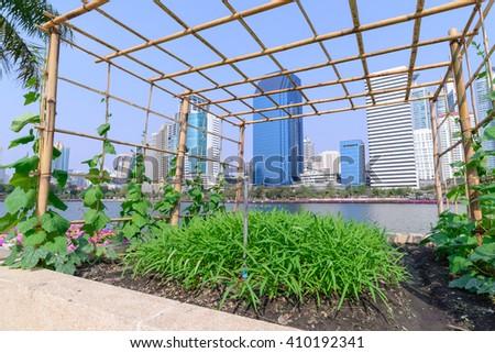 Vegetable plantation in urban garden. #410192341