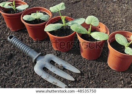 Vegetable seedlings closeup  growing in pots