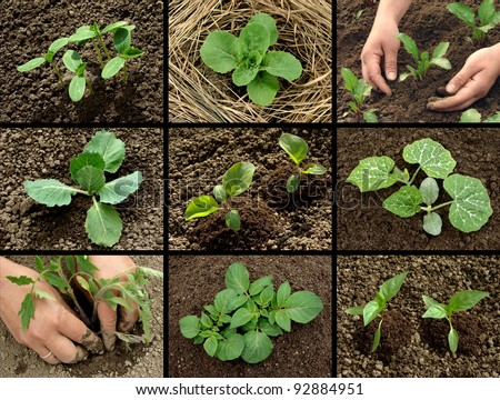 vegetable seedlings collection