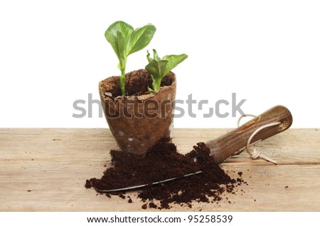 Vegetable seedlings compost and garden trowel on a wooden board