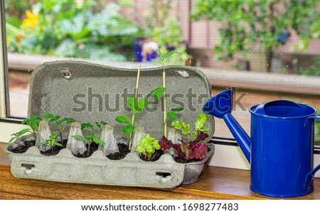 Vegetable seedlings growing in reused egg box outside on raised garden bed. Recycle, reuse to reduce waste and grow your own food. Foto d'archivio ©
