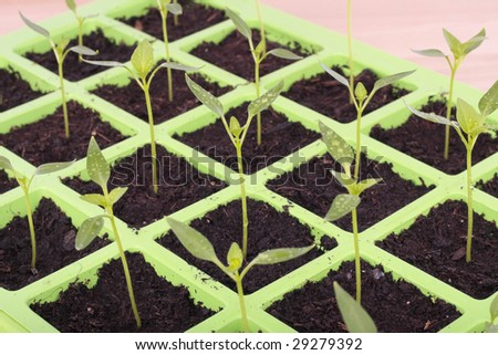 Vegetable seeds tray closeup over white background