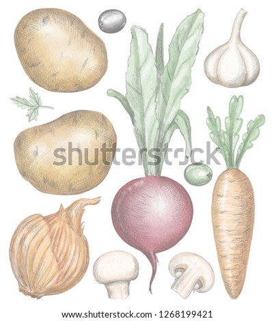 Vegetable set with mushrooms, potatoes, beet, carrot, garlic, olives, greens and onion isolated on white background. Lead pencil graphic and digital illustration