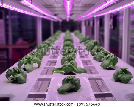 Photo of  Vegetables are growing in indoor farm(vertical farm). Plants on vertical farms grow with led lights. Vertical farming is sustainable agriculture for future food and used for plant vaccine.