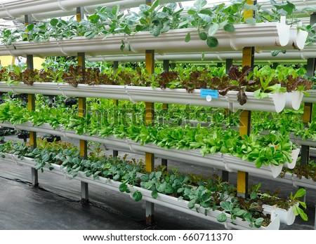 Vegetables are grown using fertigation system. Vegetables can be planted in a small space and arranged vertically. Using less soil and water mixed with fertilizer supplied by drip irrigation.