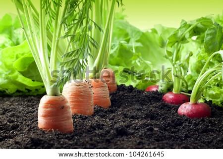 Vegetables growing in the garden