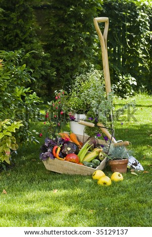Vegetables harvest and plants in a garden