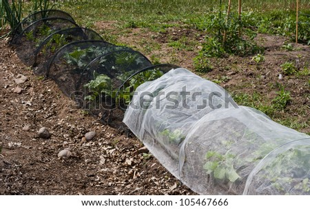 vegetables in a community garden covered with a protective mesh