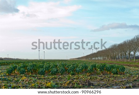 Vegetables on a field and wind energy, Netherlands