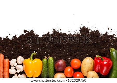 vegetables on the soil