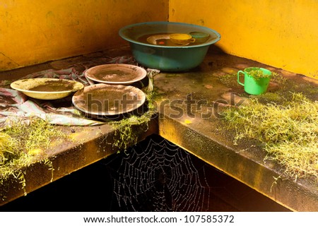 Vegetation and insects takes turn in a abandoned kitchen