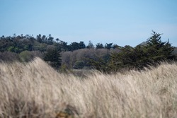 Vegetation beyond dune vegetation. Wind effect on dry grass. Vegetation on beach environments