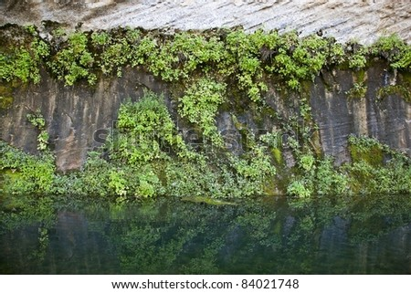 Vegetation covered canyon walls at West Clear Water Creek