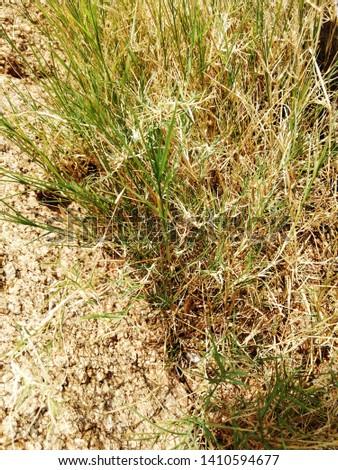 Vegetation: Desert vegetation and their population #1410594677
