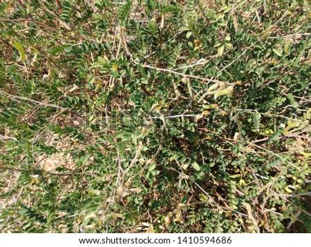 Vegetation: Desert vegetation and their population #1410594686