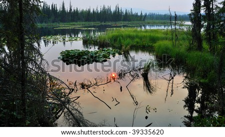 Vegetation filled Sub-Arctic Lake surrounded by Boreal Forest