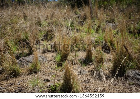 Vegetation In a dry environment with plants that seem to be dying #1364552159