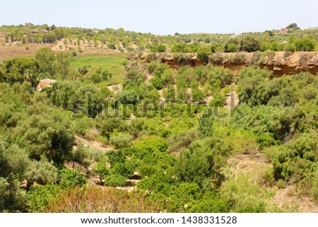 Vegetation in Valley of the Temples, Agrigento, Sicily #1438331528