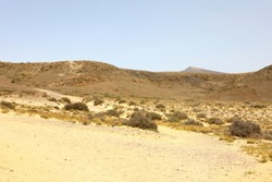 Vegetation of the desert in Lanzarote, Spain