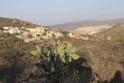 vegetation of the peña de bernal, in a sunset it is possible to observe the vegetation that prevails in the region