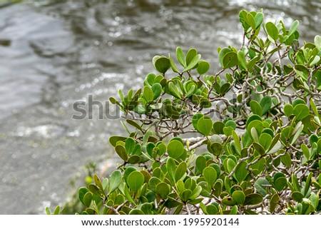 Vegetation on the edge of a river in the Brazilian savannah. Cerrado of Brazil. Amazing nature. Natural colors. Foto stock ©