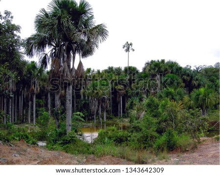 vegetation Regenwald, Rainforest vegetation #1343642309