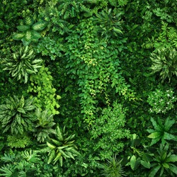 Vegetative background from leaves and plants. Lush, natural foliage. Green vegetation backdrop. Top view of a bed of green plants background. High quality image for professionnal compositing.