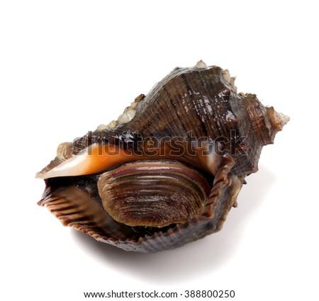 Veined rapa whelk. Isolated on white background. Closeup view. Stockfoto ©