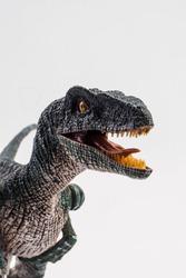 Velociraptor  ,dinosaur on white background  .