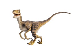 Velociraptor Dinosaur on white background .