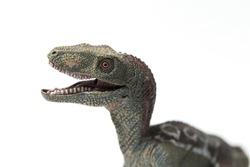 Velociraptor dinosaurs toy isolated on white background