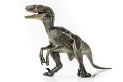 Velociraptor, plastic figurine on white background