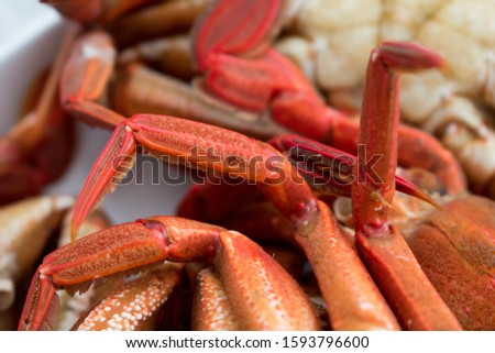 Velvet swimming crab Legs (Necora puber), cooked. Seafood belonging to the 'Brachyuran' group of crustaceans. Stockfoto ©
