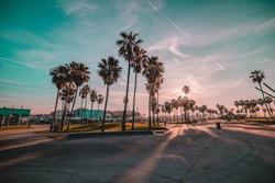 Venice beach sunrise palm trees