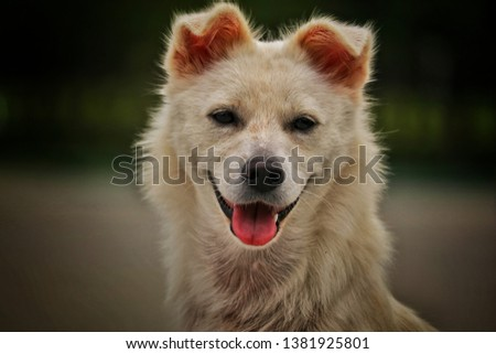 Ver cute,Cute little dog . #1381925801