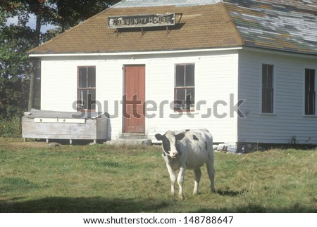 VERMONT - CIRCA 1980\'s: A black and white cow standing in front of a community house in VT