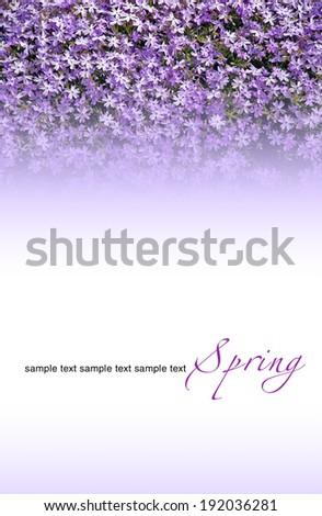 vernal flowers birthday greetings