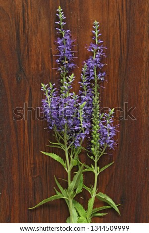 Veronica long-leaved violet color lies on a wooden background of black walnut. Minimalism. Beautiful summer wildflowers. vertical, vertical design.