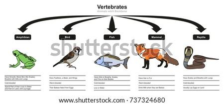 vertebrates animals...