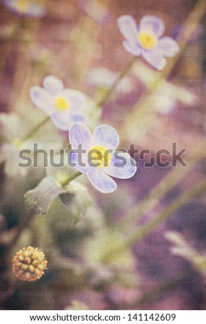 vertical color image of Anemone flowers in vintage colors
