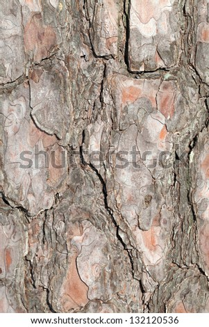Vertical detailed pine tree bark background texture