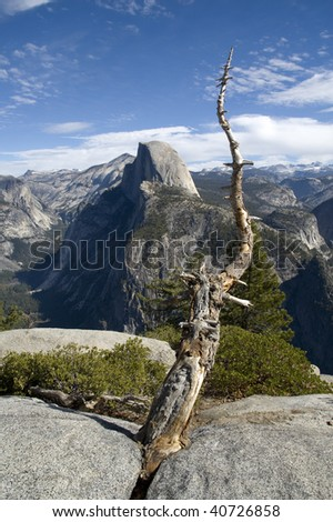 Vertical frame of a dead tree with Half Dome in the background, Yosemite National Park, California.