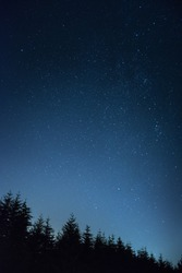 Vertical galaxy of stars towering above the dark trees. Mobile background concept.