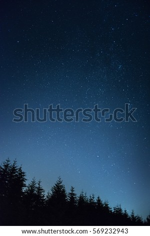 Vertical galaxy of stars towering above the dark trees. Mobile background concept. - Shutterstock ID 569232943