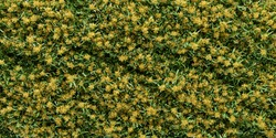 Vertical garden Background Yellow Cattleya. 3Drendering