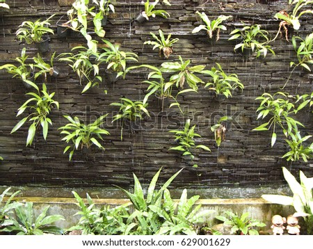 Vertical Garden On Rock Brick Wall Texture Background Images And
