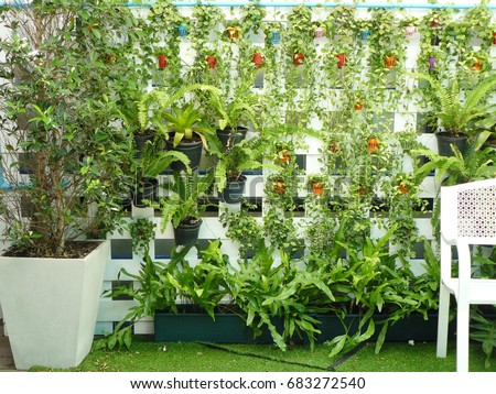 Vertical Garden On White Wood Of Lath Wall. Garden Natural Style Interior Of  Building With