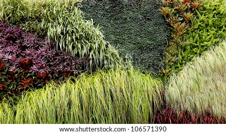 Vertical Garden with various tropical plants growing in a pattern