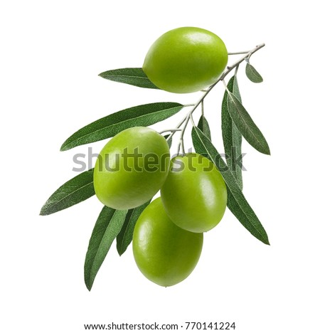 Vertical green olive branch isolated on white background as package design element
